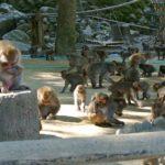 100匹目の猿は、バズ・マーケティングを先取りしていたのか。