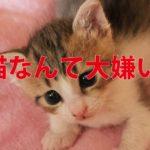 やっぱり猫が嫌い。その10の理由。猫好きな人は絶対に読まないでください。